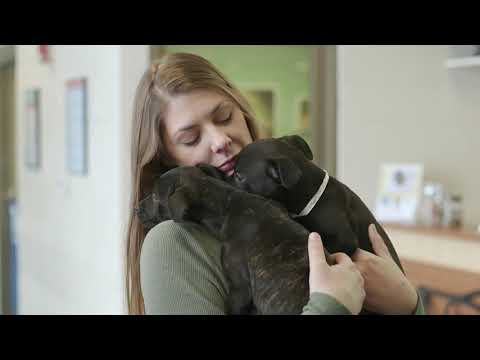 Home - Tails Humane Society