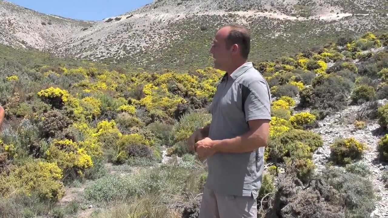 medicinal plants route in the sierra almijara and tejeda