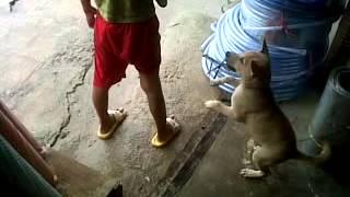 Download Video anjing VS manusia MP3 3GP MP4