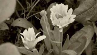 オーガニックコスメのパイオニア「ヴェレダ」の誕生や創設者シュタイナ...