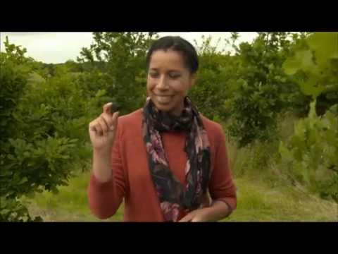 Truffle Trees - BBC Countryfile Summer Diaries 2016