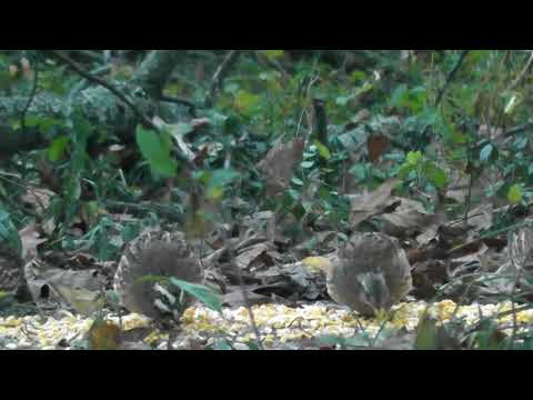 Sights of Vandola