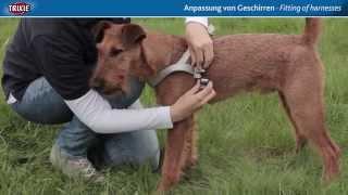 TRIXIE Heimtierbedarf - Hundegeschirre anpassen für den optimalen Sitz