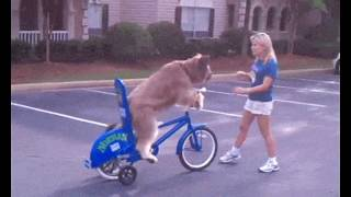 Приколы на велосипеде GIF
