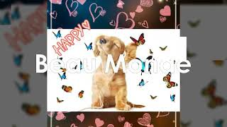 Разные фото собачек под музыку