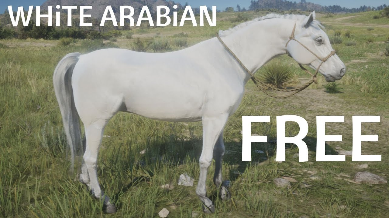 Red Dead Redemption 2 How To Find Catch White Arabian Horse