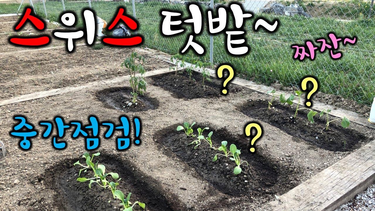 스위스 텃밭 중간점검! 그냥 이렇게 심는다고?ㅣ텃밭가꾸기 ㅣ스위스VlogㅣSwitzerland garden