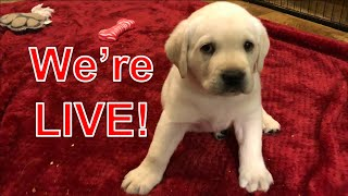LIVESTREAM  Puppy Sunday!