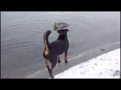 Dog meets Seal Video