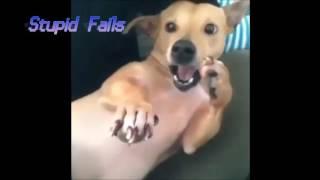 VIDEOS GRACIOSOS/Humanos vs Animales/StupidFails