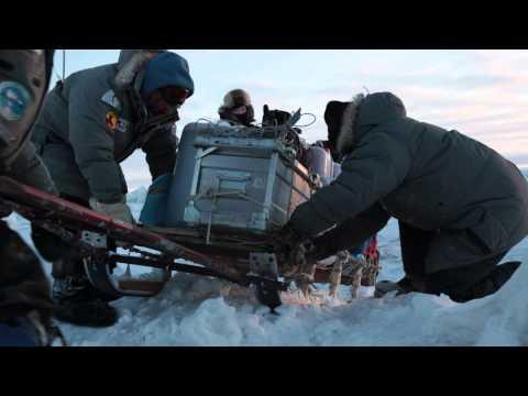 Arctic sleddogs