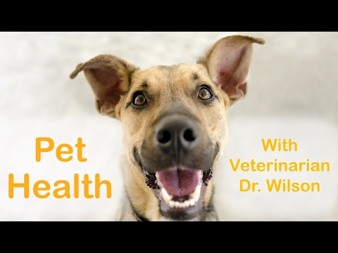 Pet Health with Veterinarian Dr. Wilson