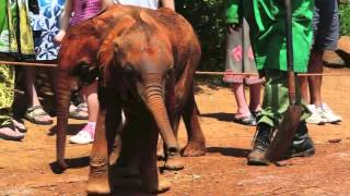 Visiting Kamok at the David Sheldrick nursery in Nairobi, Kenya