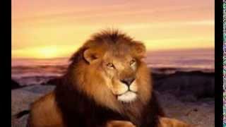 獅子+老虎影片集