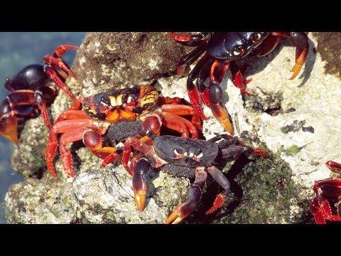 [Discover World] Cuba: Wild Island of the Caribbean
