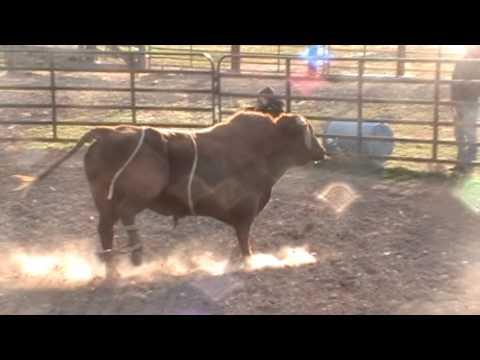 bulls 2012-13 006
