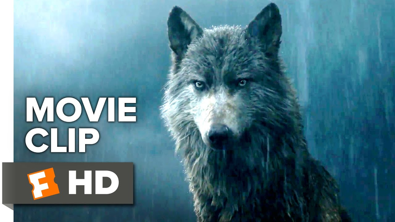 Download The Jungle Book Movie CLIP - Mowgli Leaves the Pack (2016) - Lupita Nyong'o, Ben Kingsley Movie HD