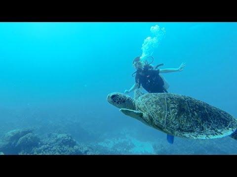 GoPro HD Scuba diving Great Barrier Reef