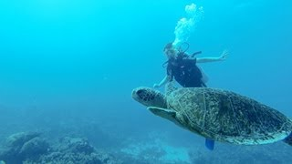 GoPro HD Scuba diving Great Barrier Reef