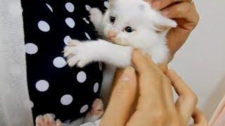 あめちゃん号出発! 旅立ちの時が来た ~衰弱した兄弟保護猫が家猫になる時、それぞれの猫生へ…-Kitten Rescue 2!