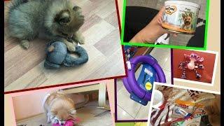 Покупки из зоомагазина для собак и щенка/Виктория Крокус(, 2016-07-14T10:04:45.000Z)