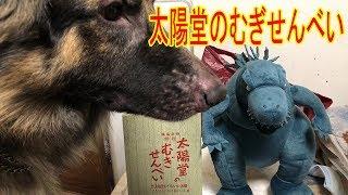 grandchild and #GermanShepherd dog#Akita Inu #JAPANESEAKITA#秋田犬 ...
