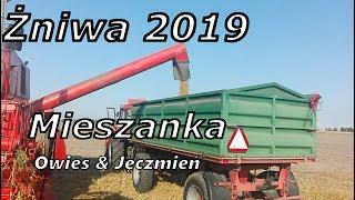 Żniwa 2019☆ Zbiór owsa ☆ Bizon Rekord Z058 ☆