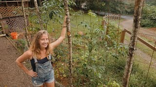 End of summer year 1 food forest tour on 1 acre northwest facing mountainside | temperate climate