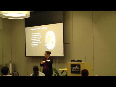 TEP Bite of Science: Louise D. McCullough, M.D., Ph.D., UT Health Science Center, Houston