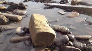 Sandy Bay, Newbiggin.  Northumberland