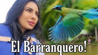El Barranquero Coronado 🐦!!! de paseo por Los Salados Colombia 🤯💕