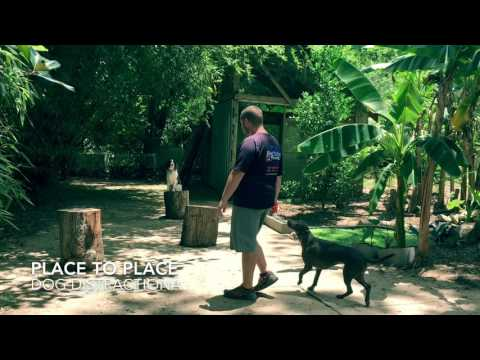 """10 month Springer Spaniel """"Zoey"""" 