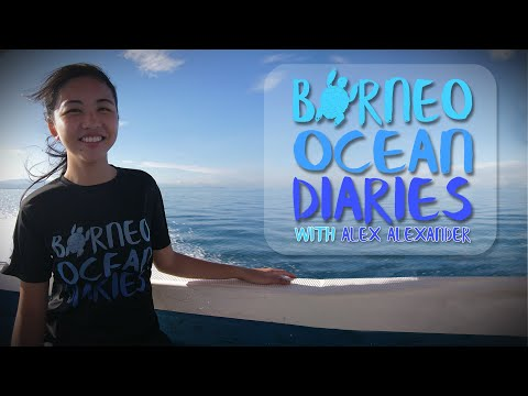 Video Of The Week | Borneo Ocean Diaries | Official Trailer [4K] | SZtv