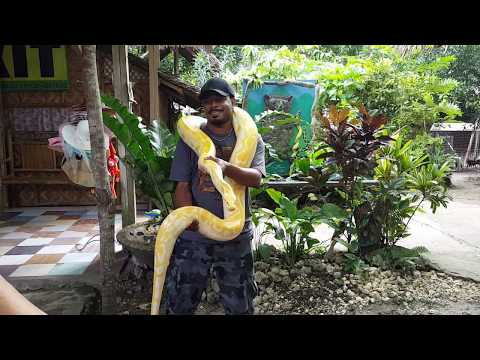 Python and Wildlife Park -  Bohol, Philippines:
