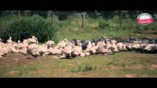 Elevage de canards à foie gras du Périgord à Cendrieux
