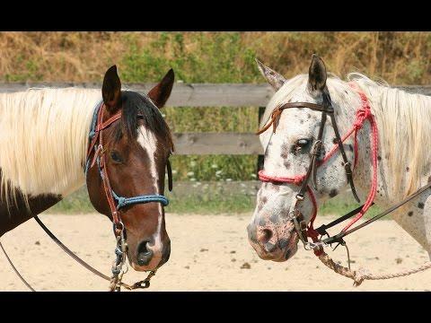 RED HORSE MOUNTAIN RANCH - Harrison, Idaho