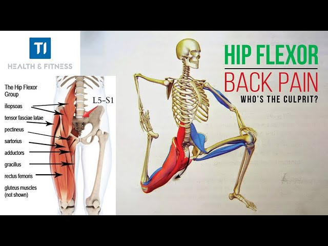 Hip Flexor Muscles, How They Work And Can Cause Hip And Lower Back