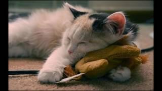 Смешные забавные котята. Часть №5