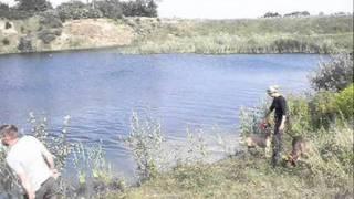 Kennel Biancorosso Bracco Italiano Water Training.wmv