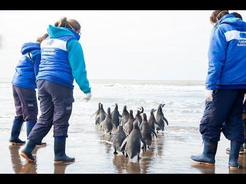 Liberaron a pingüino que fue capturado y llevado a Córdoba como mascota