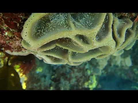 Ocean Reef Marine Life