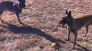 Lincoln's K9 Camp | On The Ball K9 Training | North Texas Dog Training