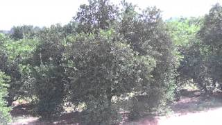farms for sale in egypt fruits trees