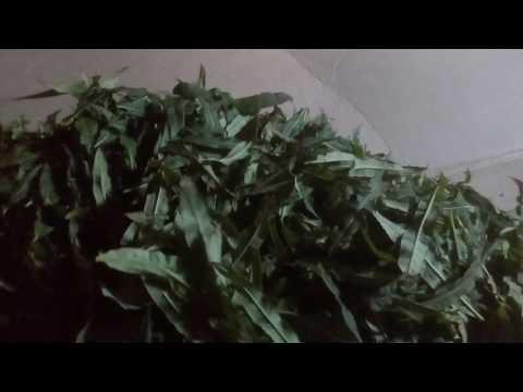76 Как сушить и завяливать листья кипрея, иван-чая, другие травы для чая и лекарственные растения