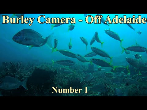 Burley camera off Adelaide Link to new Video https://youtu.be/hZ6MS-c31Wc