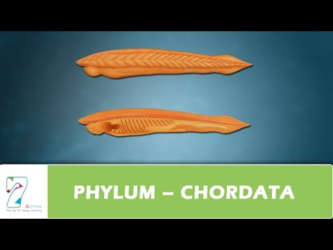 PHYLUM – CHORDATA