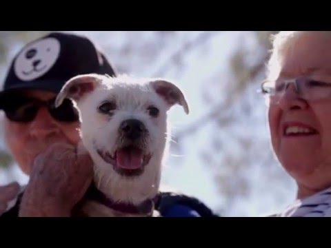 Joy Charles Spot Pet Rescue Short Story for PetSmart Charities