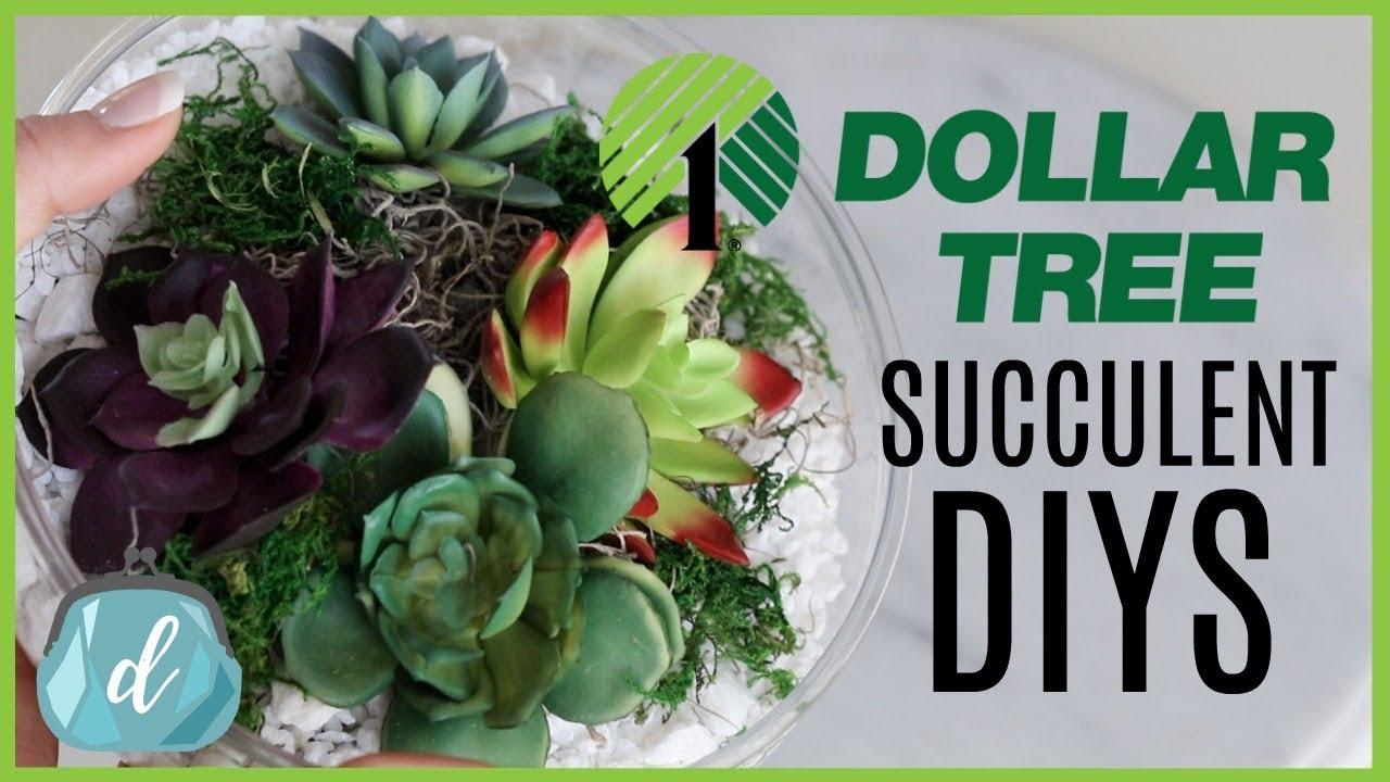 Dollar Tree Crate Barrel Diy Dupes Succulent Terrariums And