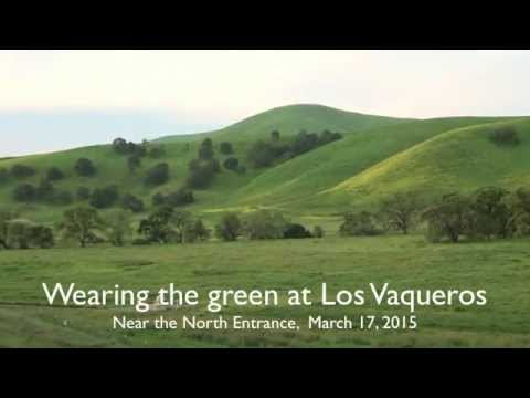 Wearing the Green