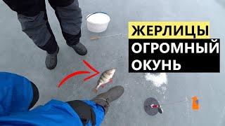 Первая рыбалка на жерлицы. ОГРОМНЫЙ ОКУНЬ. Зимняя рыбалка.
